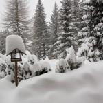 Winter_Ebnerhuette_Vogelhaus